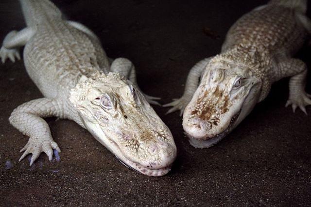 Conheça mais 17 animais albinos que já foram identificados na natureza