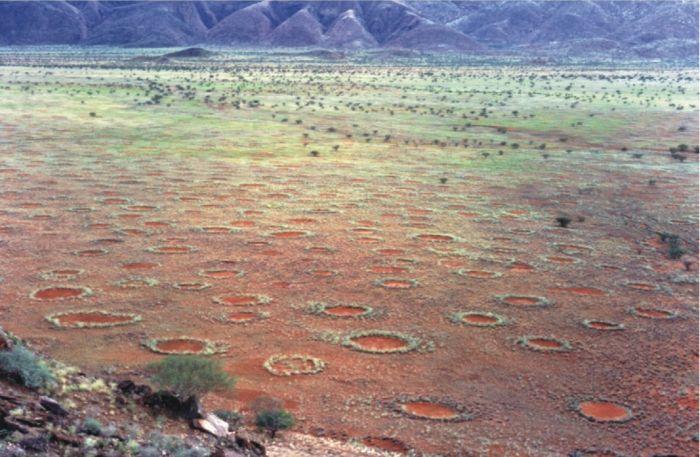 19205336312252 Origen de los misteriosos 'círculos de hadas' parece haber sido descubierta