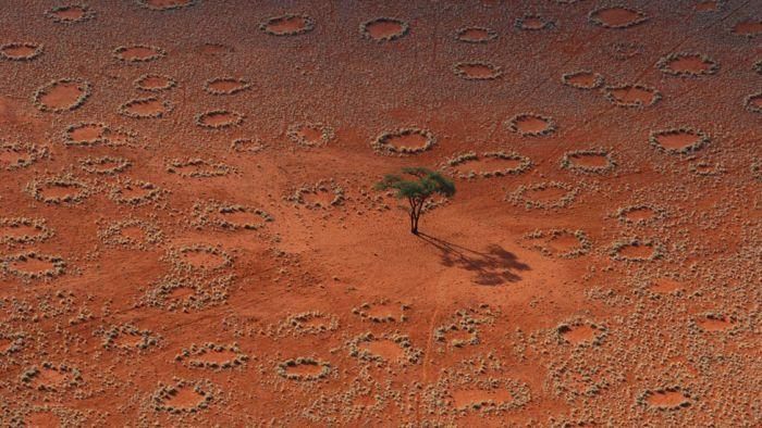 19205508345253 Origen de los misteriosos 'círculos de hadas' parece haber sido descubierta
