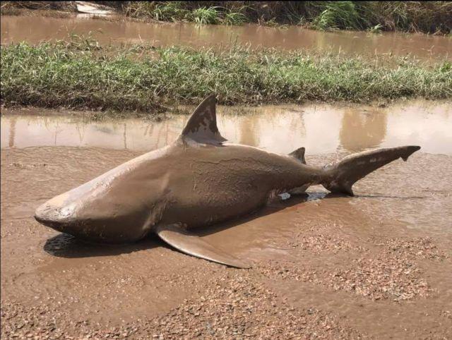 Animal foi parar em uma estrada após passagem de ciclone (Crédito: Reprodução)