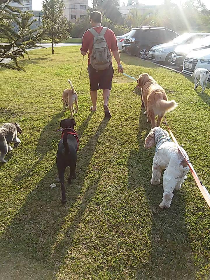 25172604239298 5 comportamientos que usted no debe tener con su perro