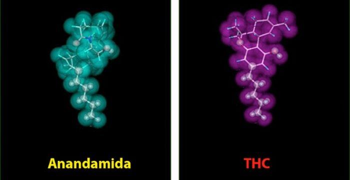 Sustancia presente en la pimienta y la marihuana puede - Porros de hortensias ...