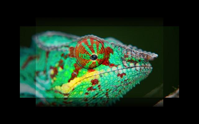 UltraWideo - Imagem 1 do software