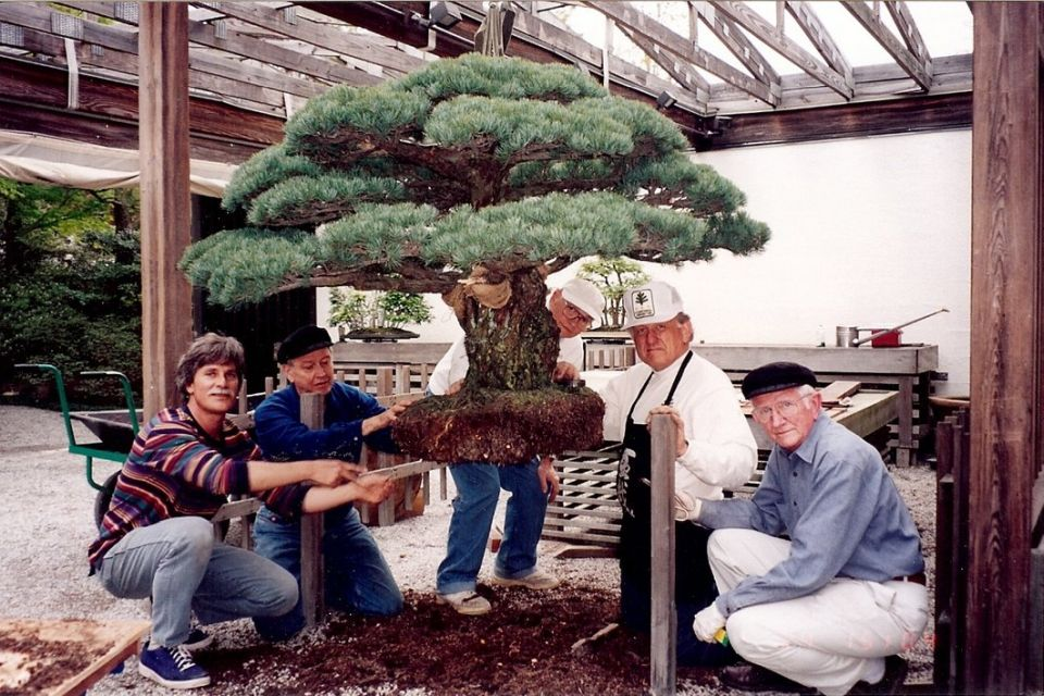 Surpreendente: bonsai de quase 400 anos sobreviveu até à bomba de Hiroshima