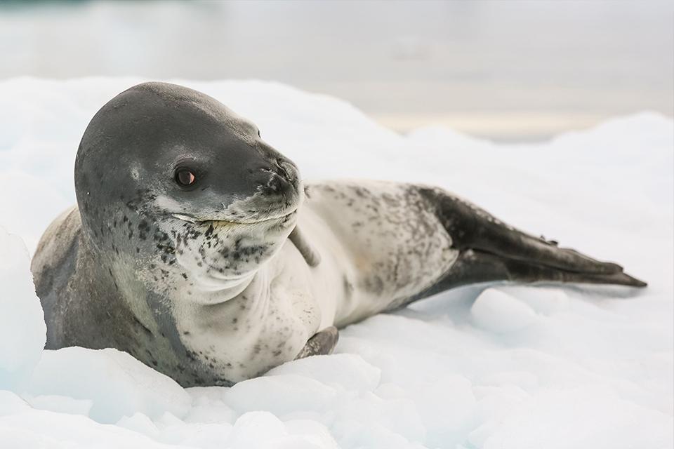 Sabe aquele pendrive encontrado nas fezes de uma foca? Encontraram a dona!