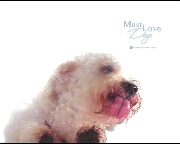 Must Love Dogs Wallpaper : must love dogs pug screensaver free Images - Frompo