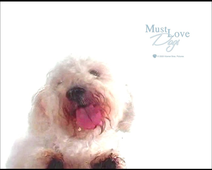 Must Love Dogs Screensaver Download
