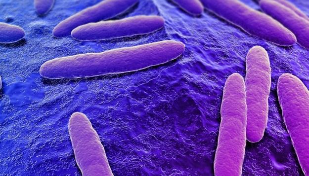 Mensagens por bactérias
