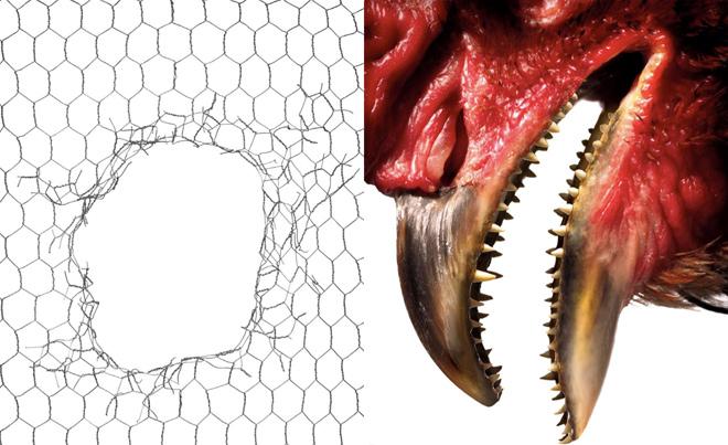 Como cientistas vão hackear uma galinha para recriar um dinossauro