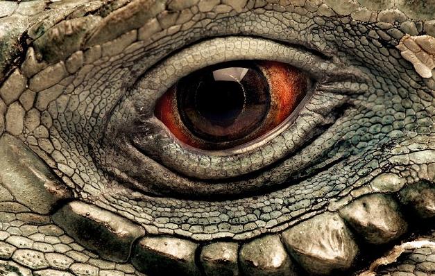 Fotógrafos registram olhos de animais em um ensaio impressionante