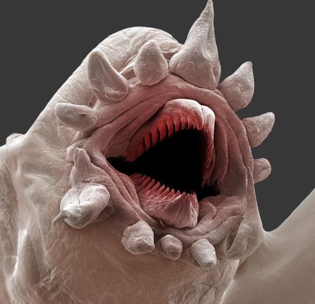 6 terríveis monstros das profundezas do oceano [imagens]