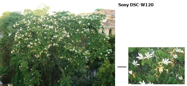 Sony DSC-W120