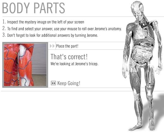 Jogo do Artificial Anatomy