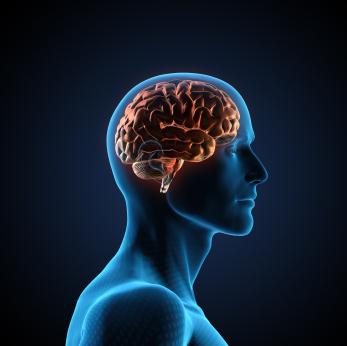 Celulares ampliam a atividade cerebral
