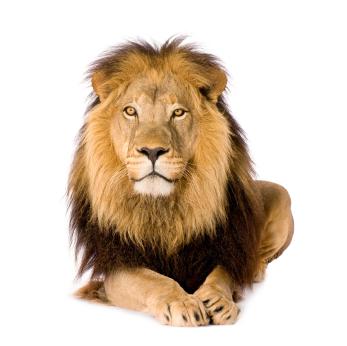 O leão estã atento às compras internacionais