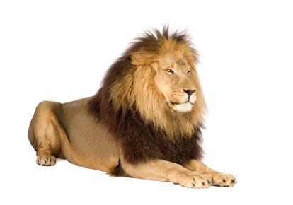 Com altos volumes, o leão tributa por amostragem