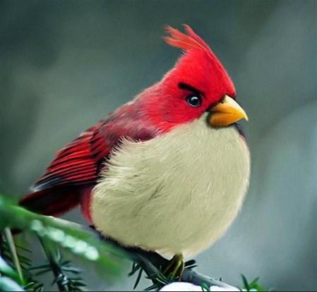 Os Angry Birds reais