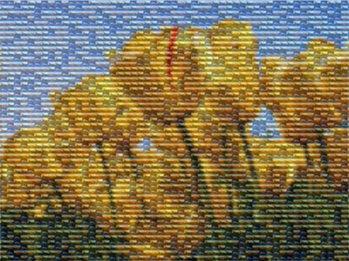 Você pode criar um mosaico com mais de uma foto.