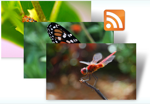 Insects Dynamic Theme.