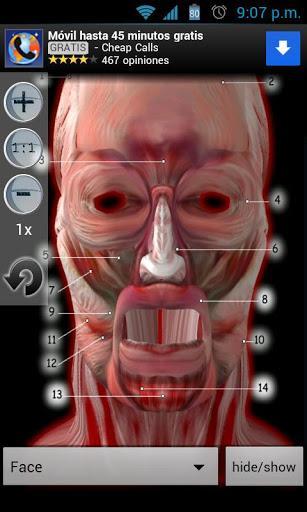 Anatomy Muscles - Imagem 2 do software
