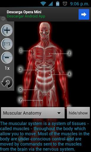 Anatomy Muscles - Imagem 1 do software