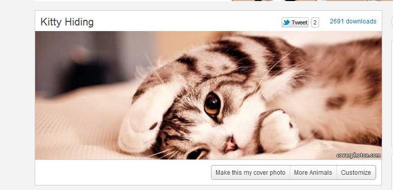 Coverphotoz - Imagem 1 do software