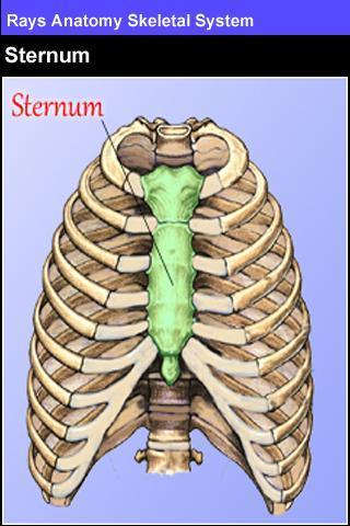 Rays Anatomy Skeletal System - Imagem 2 do software