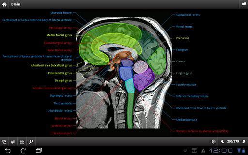 IMAIOS e-Anatomy - Imagem 1 do software