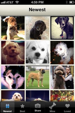 Dogsly - Imagem 2 do software
