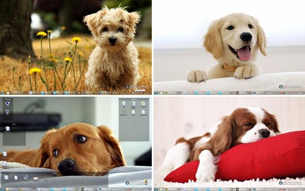 Cute Dogs Windows 7 Theme - Imagem 2 do software