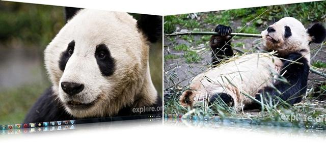 Pandas in Peril Wallpaper Pack
