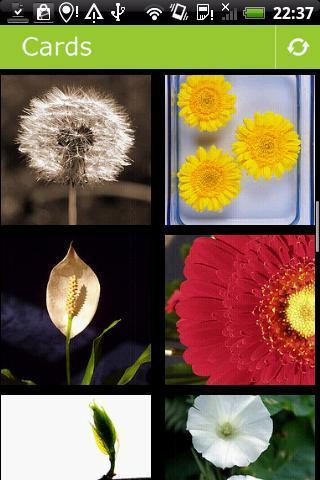 Flowers Postcards - Imagem 1 do software