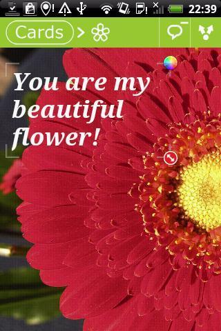 Flowers Postcards - Imagem 2 do software