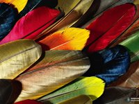 Imagem 2 do Colorful Feathers Windows 7 Theme