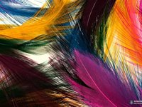 Imagem 3 do Colorful Feathers Windows 7 Theme