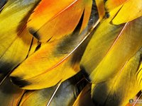 Imagem 4 do Colorful Feathers Windows 7 Theme