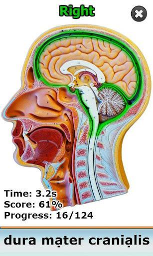 Anatomy Star - CNS (the Brain) - Imagem 2 do software