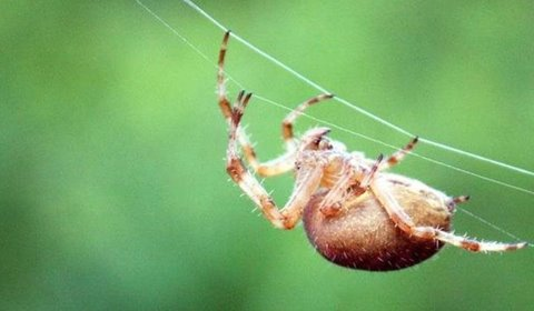 Imagem de As 11 aranhas mais perigosas e venenosas do mundo no site Mega Curioso