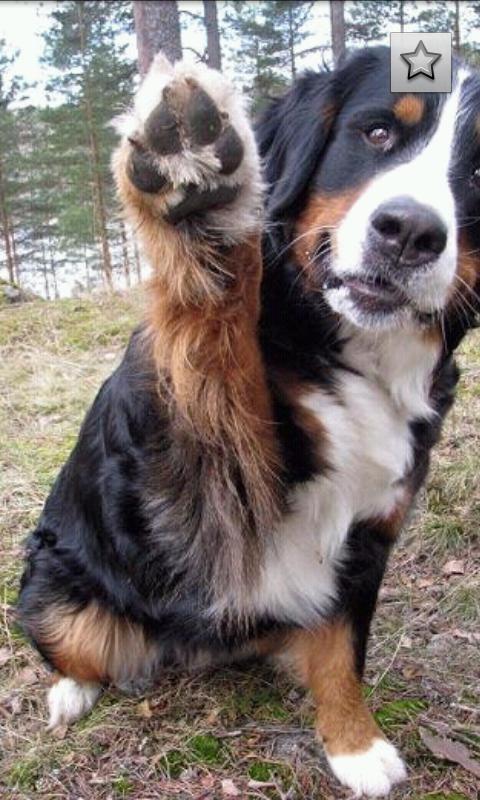 Dog Breeds - Imagem 2 do software