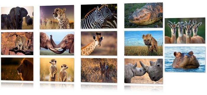 Tema Vida Selvagem na África - Imagem 1 do software