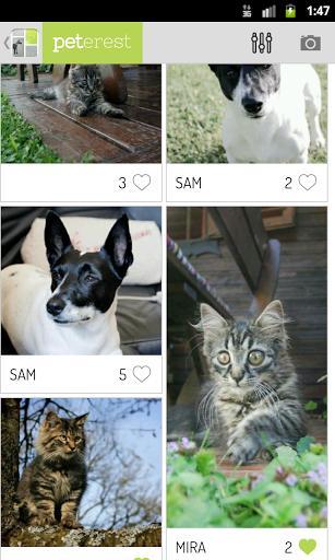 Peterest - Pet Image Gallery - Imagem 1 do software