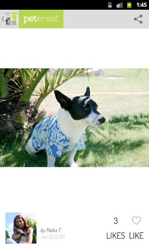 Peterest - Pet Image Gallery - Imagem 2 do software