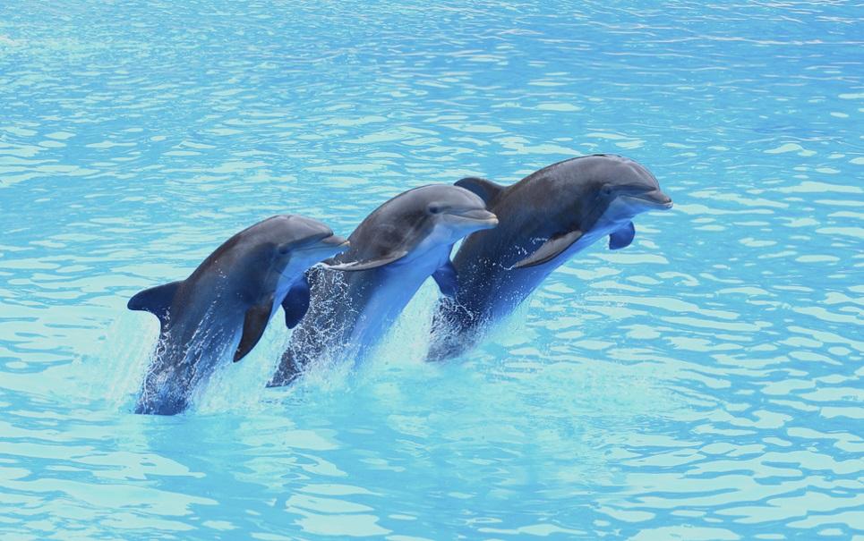 Que elefantes que nada! Golfinhos têm as melhores memórias do reino animal
