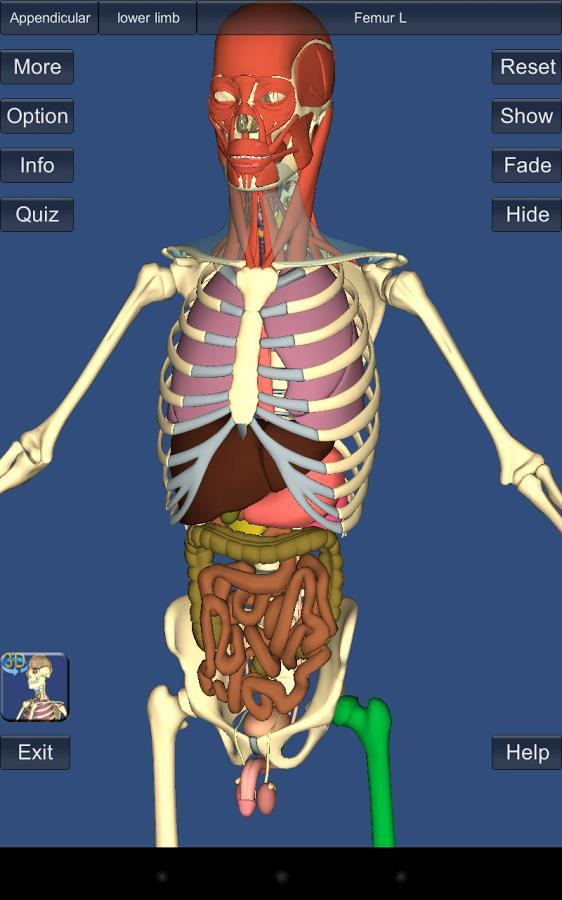 3D Anatomy Lite - Imagem 1 do software