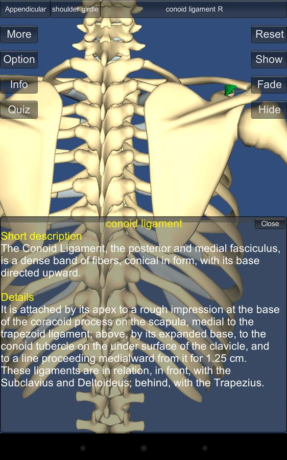3D Anatomy Lite - Imagem 2 do software