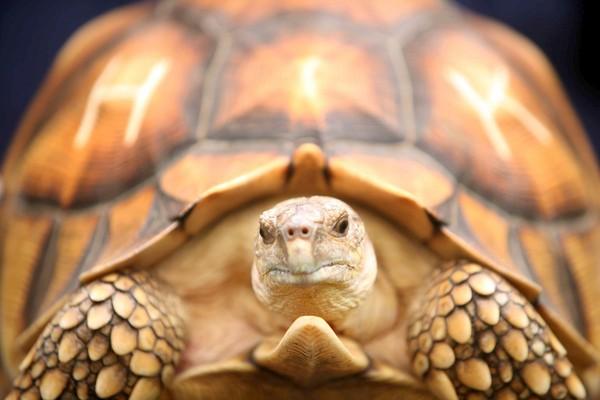 Reprodução/turtleconservancy