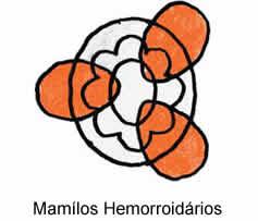 Reprodução/Dr. Fernando Valério