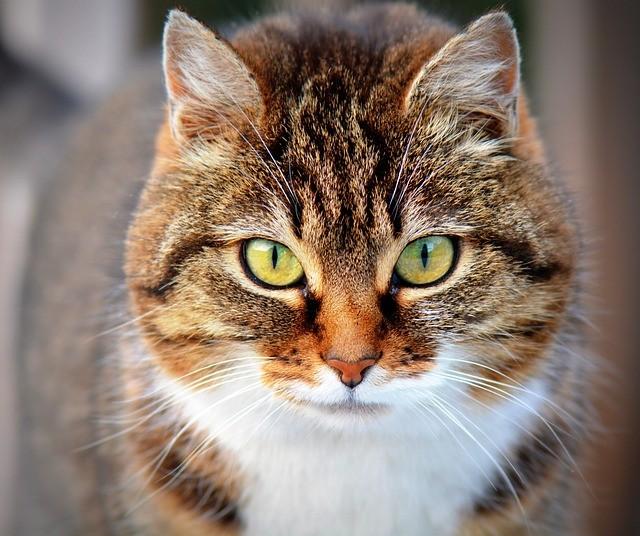 Para A Ciencia Gatos Sao Animais Frios Insensiveis E Nao Amam Voce