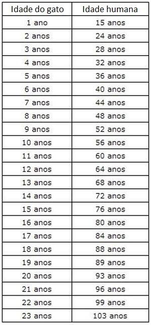 Veja a maneira correta de calcular a idade 'humana' de seu gato ...