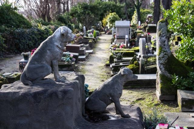 Os pets também morrem: conheça 4 curiosos cemitérios para animais - Mega Curioso